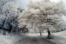 Nikon D80 Infrared converted 690nm Digital SLR Camera (Body only) Infrared