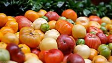 Heirloom tomato Seeds, (All Sort Mix) Open Pollinated - Organically Grown !