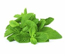 30ML Peppermint & More Essential Oils 100% Pure Natural Free Shipping Worldwide