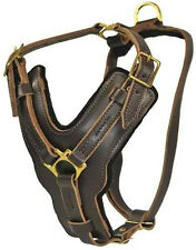 The Victory Genuine Leather Padded  Dog Harness by D&T