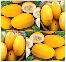 BULK VINE PEACH Melons Seeds ~~TASTE JUST LIKE MANGO & GREAT FOR MAKING PIES ~!!