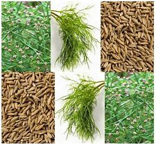 CUMIN HERB SEEDS - Used In Mexican Indian Dishes - Second Most used Spice Next T