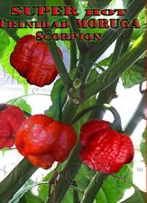 Dried Trinidad Scorpion Moruga Pepper - Whole Pods Moruga Pepper - Extremely Hot
