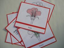 PARTS of FLOWER CARDS Montessori Materials Preschool Science Botany Nomenclature