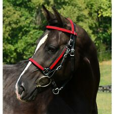 HORSE  SIZE  HALTER BRIDLE & REINS made from BETA BIOTHANE (ANY 2 COLOR COMBO)