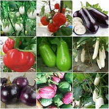 Heirloom Garden vegetable eggplant seed Non-GMO seeds white survival organic