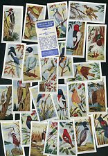 SWEETULE 1958 SET OF 25 BIRDS OF THE BRITISH COMMONWEALTH BLUE BACK TRADE CARDS