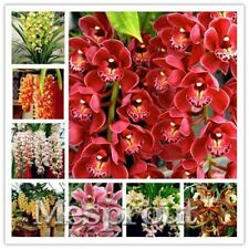 100pcs Cymbidium orchid Rare bonsai Plants flower seeds 22 colours to choose pla