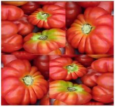 BRANDYWINE PINK Tomato seeds - HEIRLOOM - Up To 1 LB ~ HUGE FRUIT with Exotic Fl