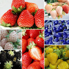 1Pack 100 Pcs Rare Delicious Strawberry Seeds Vegetables Fruits Seeds 6 COLORS