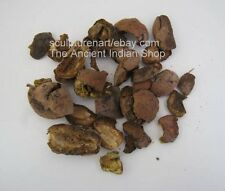 Behada Fruit Dried, Terminalia Bellirica (Gaertn.) Roxb, Indian Raw & Whole Herb