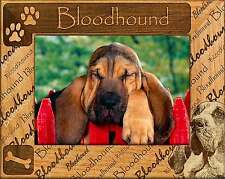 BLOODHOUND: ENGRAVED ALDERWOOD PHOTO FRAME #0025 Available in four sizes