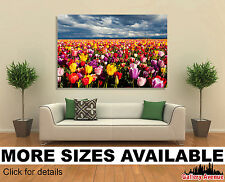 Wall Art Canvas Picture Print - Field of Colorful Tulips 3.2
