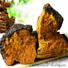 Natural Wild Changbai Mountain Chaga Mushroom Fungus Inonotus obliquus #3019