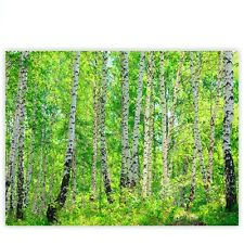 """Brands Canvas picture """"Birch Forest"""" ! Classic (4:3) ! Birch Forest Trees Sun"""