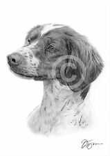 BRITTANY SPANIEL art pencil drawing print A3 / A4 sizes signed artwork dog