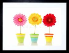 GERBERA RED YELLOW PINK FLOWERS PHOTO FRAMED ART PRINT PICTURE & MOUNT F12X370