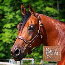 Billy Royal® Saratoga Padded Leather Halter Horse Tack Equestrian