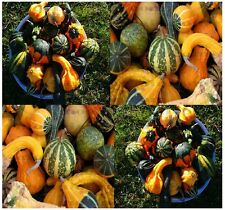 LARGE & SMALL MIX Gourds seeds - More Than 15 DIFFERENT TYPES - Bushel Dipper...