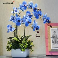 Sky Blue Phalaenopsis Orchid Seeds Flower Seeds Indoor Bonsai  100 particles