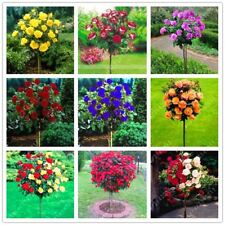 100pcs/bag rose tree seeds bonsai flower tree seed Chinese roses 18 colors give