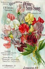 Perry Vintage Seed Cover Picture Art Print Poster A4 A3 A2 A1