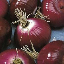 Onion Seeds, Vernina - Deep violet-red onion - tastes GREAT!!!! Free Shipping!!!