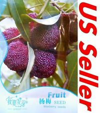 MYRICA Rubra Chinese Strawberry E101, 5 Seeds Waxberry Tree Seeds Red Bayberry
