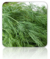 Dill Bouquet Seeds - Delicious & Sooo Tasty!!!! Great on Potatoes- Free Shipping