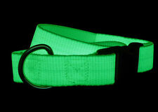 Glow in the Dark Dog Pet Collar Charges in Light