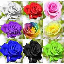 100+ Rose Flower Seeds Lover Rainbow Multicolor Plants Garden Rare Gift Xmas