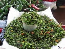 Chile Pequin Peppers - Tiny brilliantly red chile peppers - they pack a punch!!