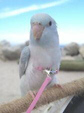 Mini Wings Parrotlet Harness