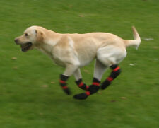 Dog boots for disabled dogs, CDRM, nerve damage or dragged paws. Pro-Active Paws