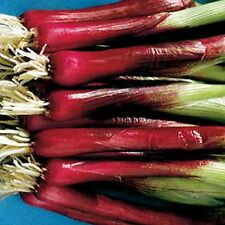 Red Baron Scallion Seeds - Vibrant burgundy color!! -  Mildly flavored !!!!!