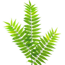 Artificial Fern Leaf Spray - Wedding Leaves / Greenery / Fillers & Foliage