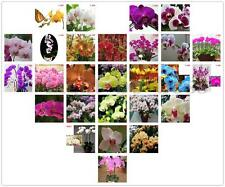 Phalaenopsis Amabilis Butterfly Moth Orchid Flower Seeds Bonsai Pot Plant Home