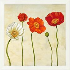 Global Gallery 'Coquelicots II' by Cynthia Ann Framed Painting Print on Canvas