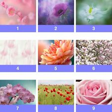 Flowers Floral Rose Blossom Orchid Wall Mural Photo Wallpaper FL-WM