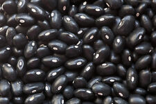 Bean Seed: Black Turtle Soup Beans  Fresh Seed   FREE Shipping