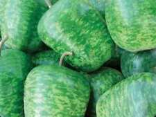 Gourd Seed: Large Apple Gourd Seeds  Fresh Seed  FREE Shipping