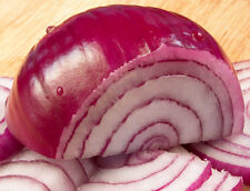 Onion Seed: Red Burgundy Onion Seeds  Fresh Seed   FREE Shipping