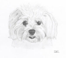 MALTESE dog Ltd Edit art drawing print 2 sizes A4/A3 & greetings card  available