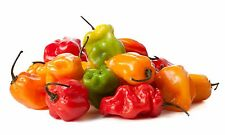 Pepper Seed: Habanero Pepper Seeds  FRESH Seed  FREE Shipping