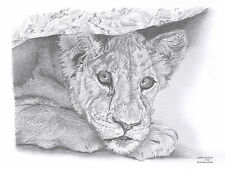 LION CUB Limited Edition art drawing prints  2 sizes A4/A3 &  Card Available