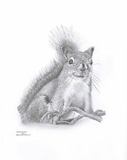 SQUIRREL Ltd Edition art drawing prints  2 sizes A4/A3 &  Card Available