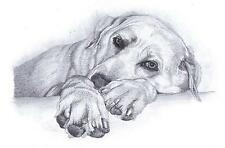 GOLDEN LABRADOR (1) dog LE art drawing prints 2 sizes A4/A3 & Card Available