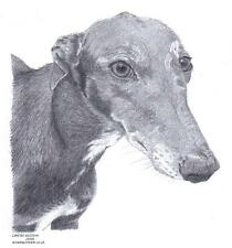 GREYHOUND/ LURCHER dog LE art drawing print 2 sizes A4/A3 &  card available