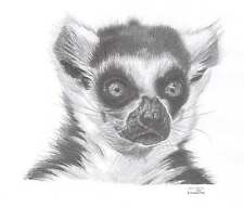 RING TAILED LEMUR LE art drawing prints  2 sizes A4/A3 &  Card Available