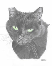 BLACK CAT Green Eyes L Edit art drawing prints  2 sizes A4/A3 &  Card available